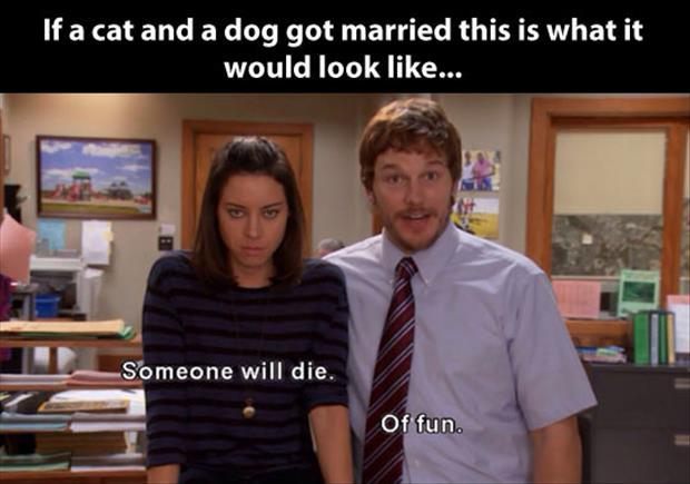 a cat and dog got married