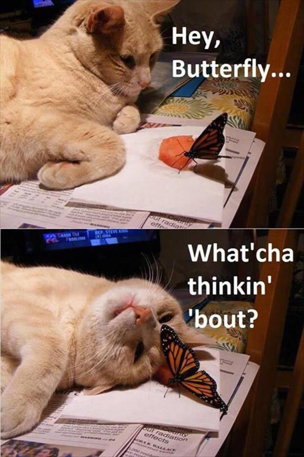 funny animals (16)