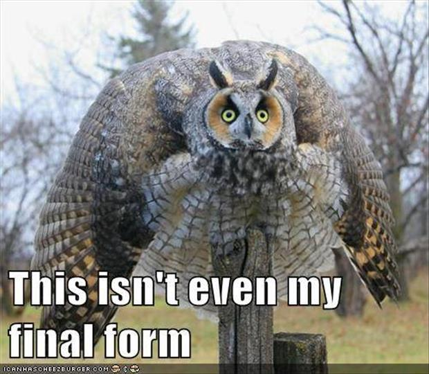 funny animals (5)