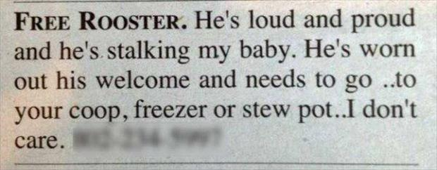 funny classified ads (4)