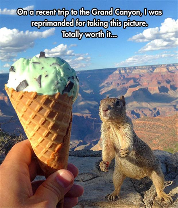 ice cream and squirrels