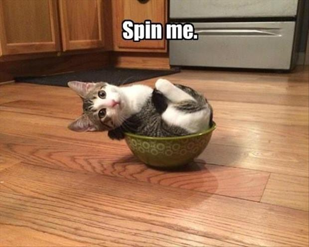 please spin me