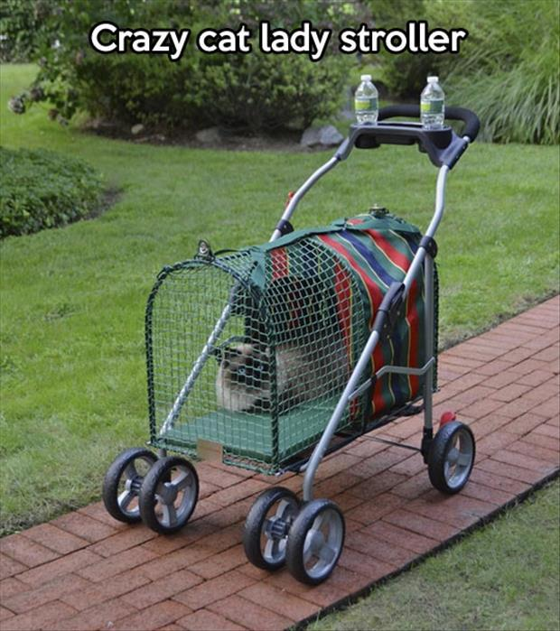 the cat lady stroller