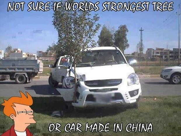 world's strongest tree