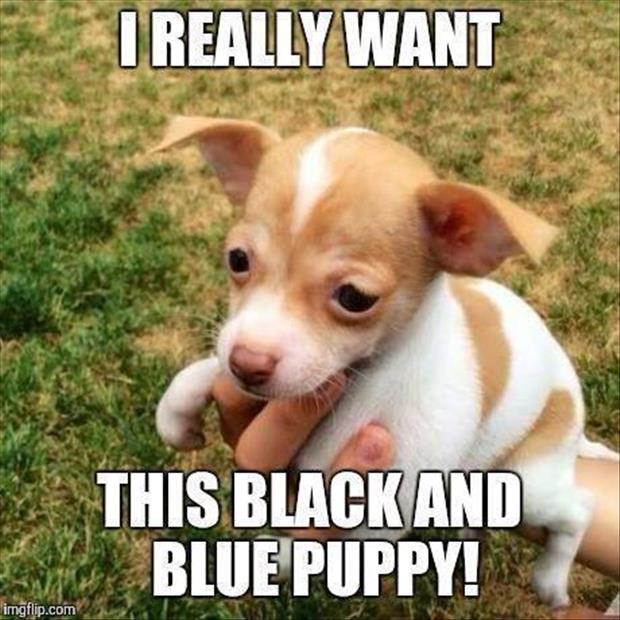 black and blue puppy