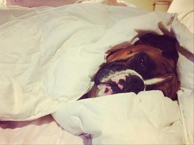 even the dogs don't want to get out of bed today (8)