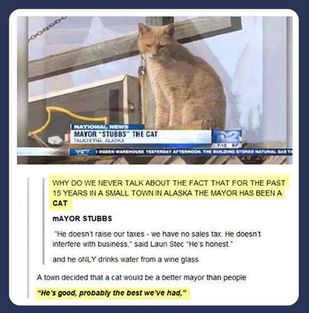 the cat is the mayor of alaska