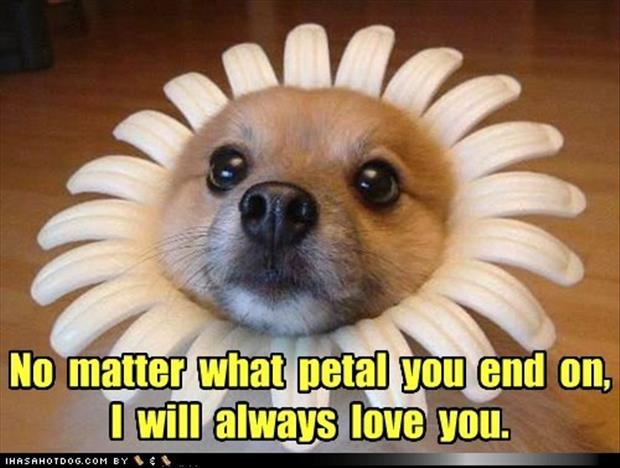 I Will Always Love You Funny Quotes : Pics Photos - Always Love You Funny Pictures Quotes Memes Facebook
