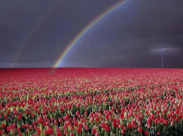 at the end of the rainbows (6)