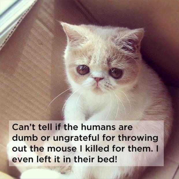 wanna know what your cat is really thinking 20 pics