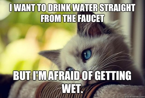 Funny Memes About Life Struggles: Life Of A Cat, The Struggle Is Real
