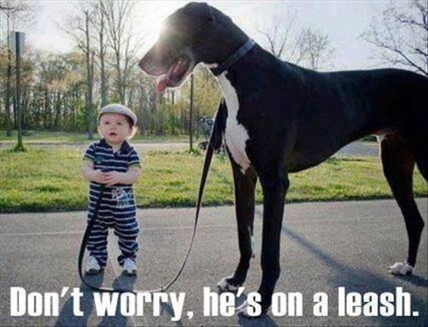 Dump a day funny animal pictures of the day 23 pics