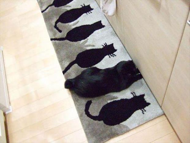 funny cats (1)