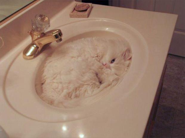 funny cats (12)