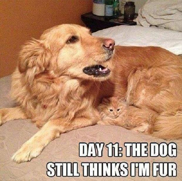 funny cats (18)