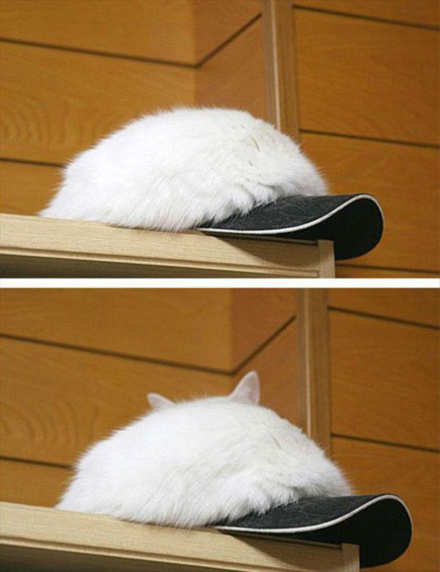 funny cats (6)
