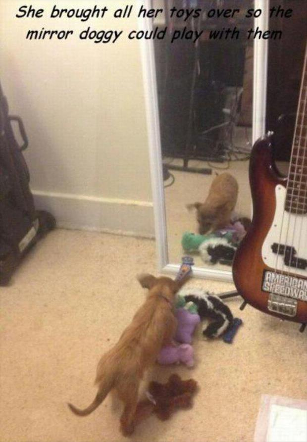 mirror doggy