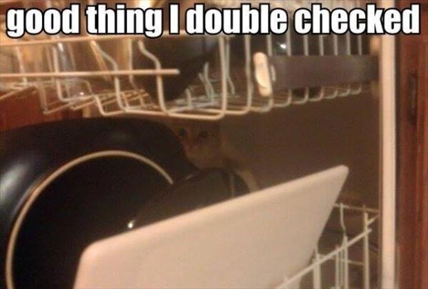 the cat is in the dishwasher