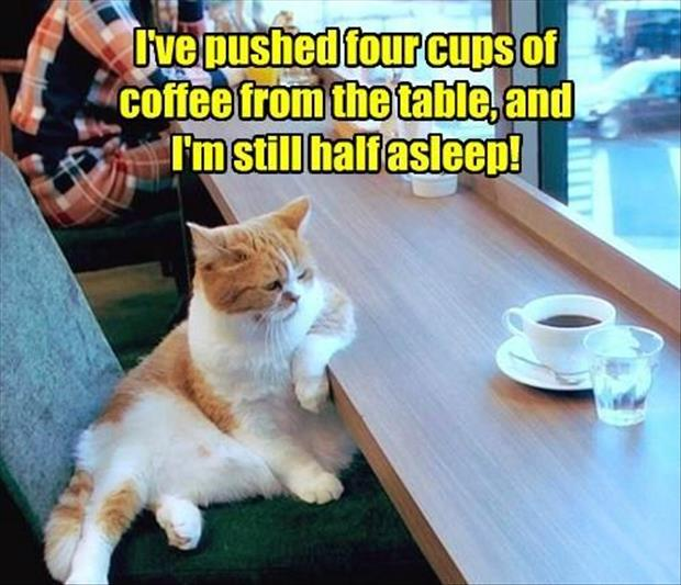 the cat loves coffee