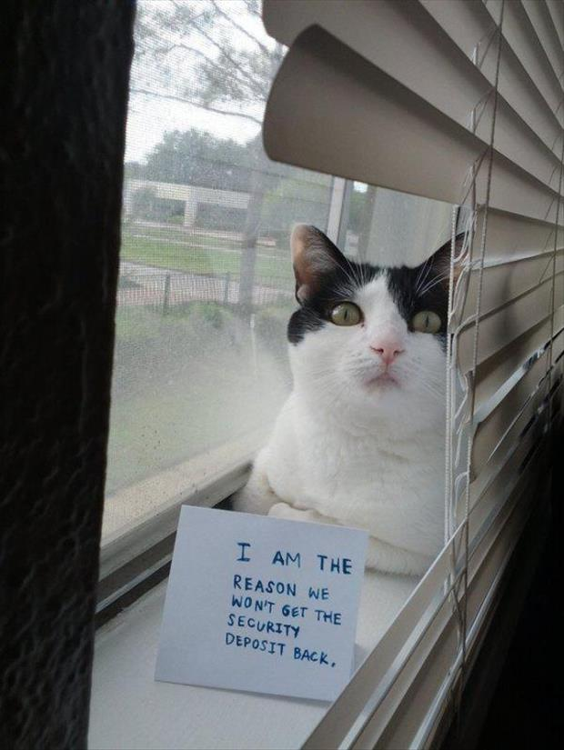 the cat shaming