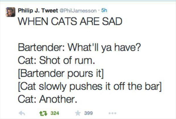 the cats at the bar