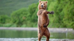 16 Animals With Better Dance Moves Than You