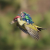The Internet Had Way To Much Fun With The Weasel Riding The Woodpecker Photo – 20 Pics