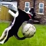 fetch fails (1)