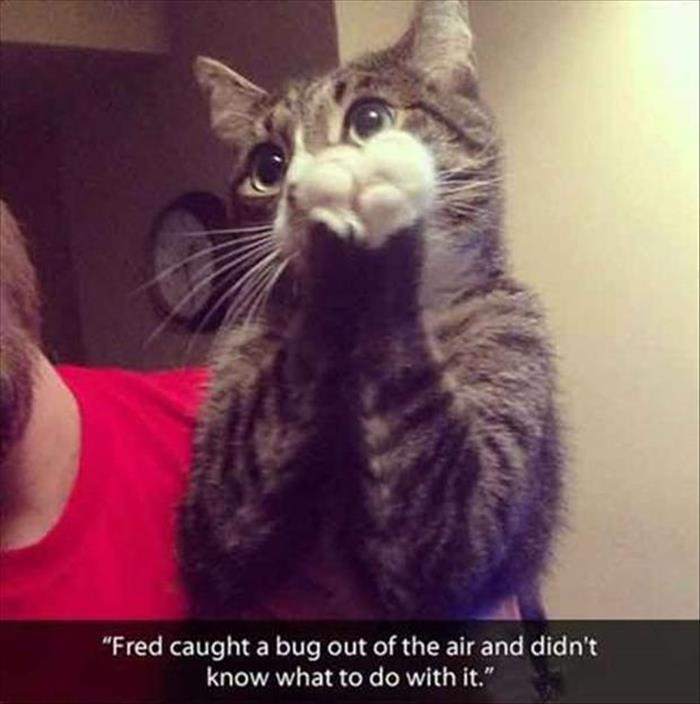 funny animal pictures (16)