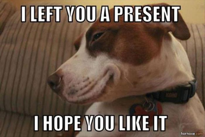 funny animal pictures (21)