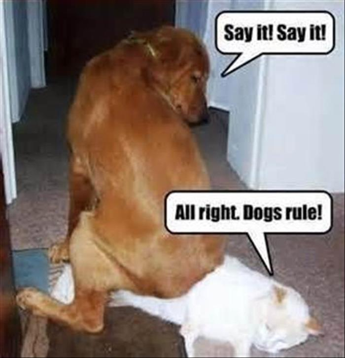 funny animal pictures (22)