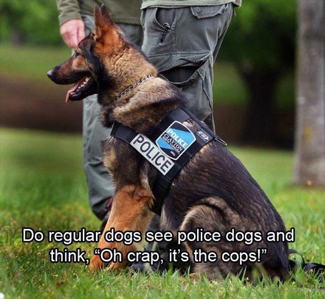 funny police dogs