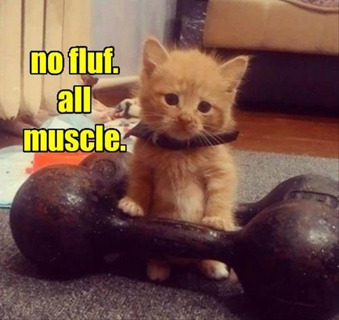 kitty is all muscle