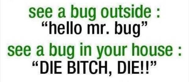 see a bug