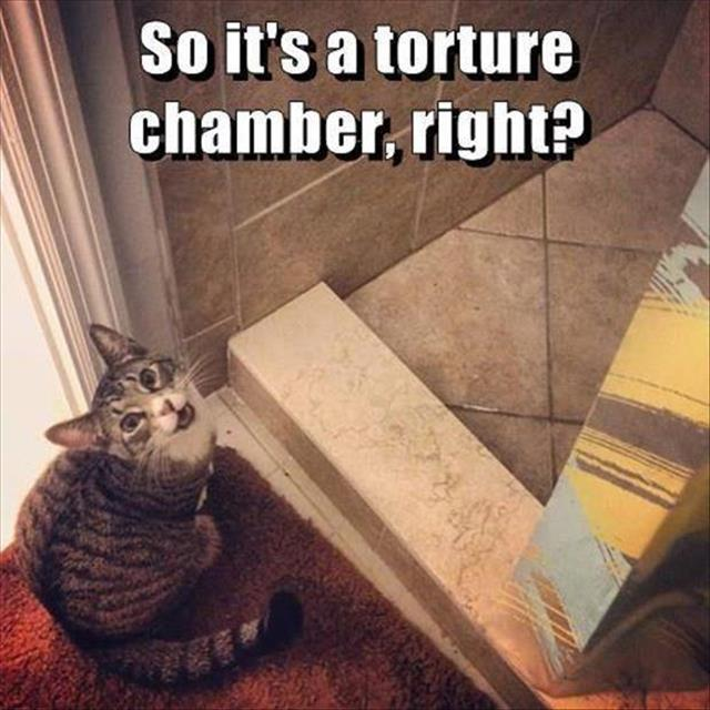 the funny animals (26)