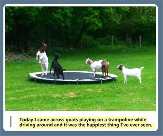 the funny animals (4)
