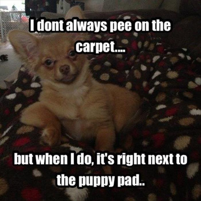 the funny animals (5)