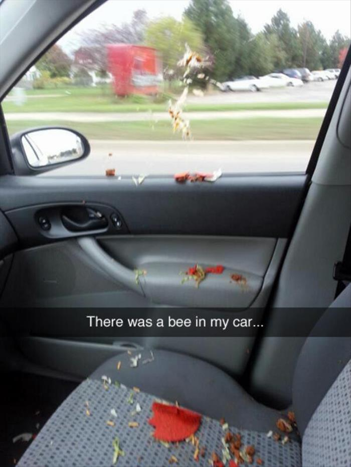 there was a bee in thecar