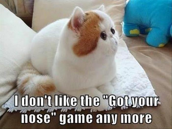 fun animal pictures (7)