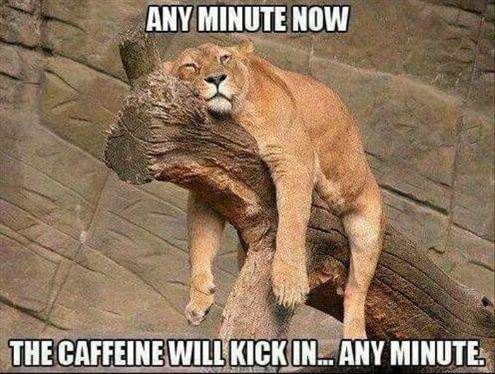 Funny Memes For Kids Animals : Funny animal pictures of the day 25 pics