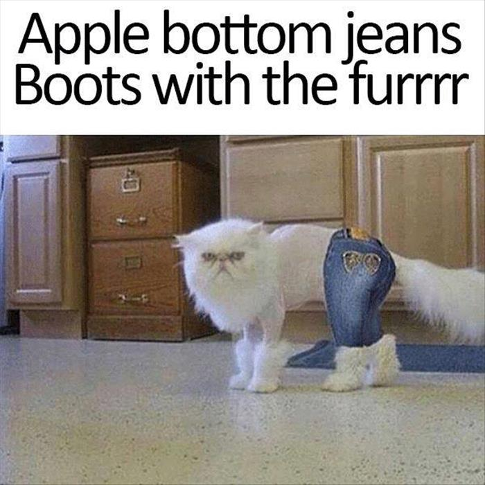 Boots With The Fur Cat Meme