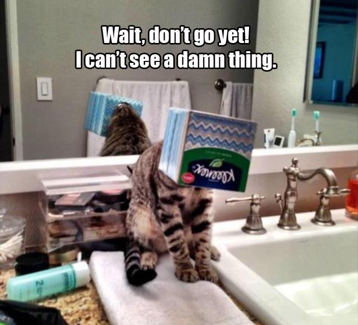 Animals And Pets Funny Memes