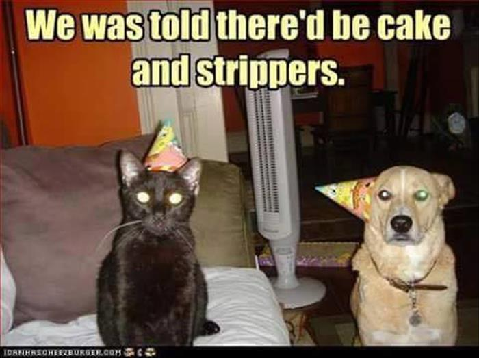 is there cake and strippers