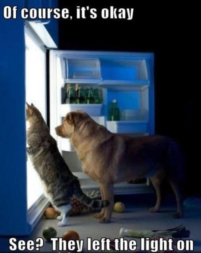 the funny animals (6)
