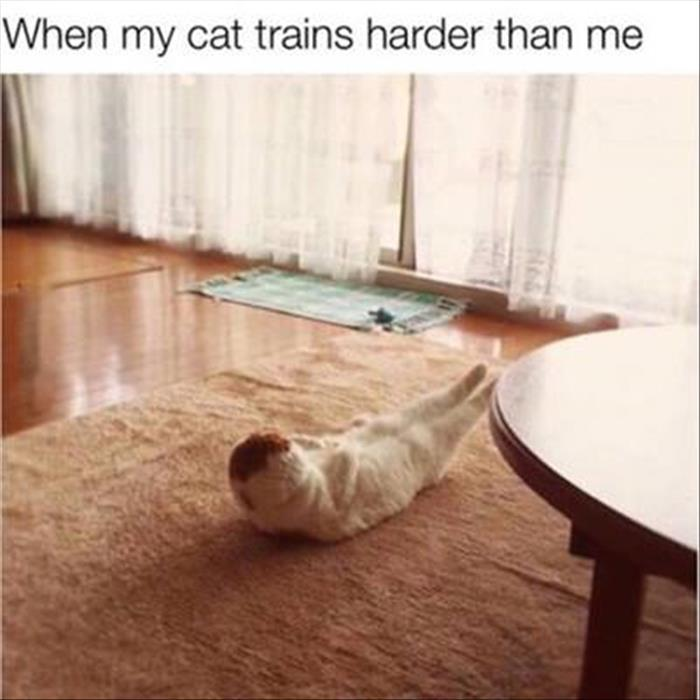 when my cat is training