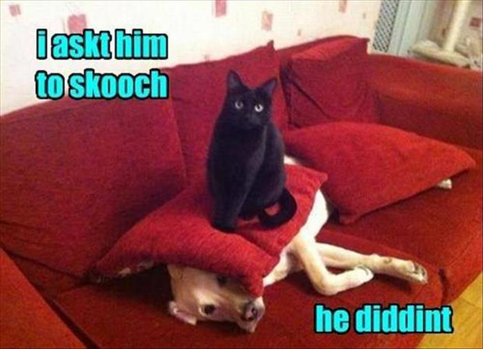 a funny animals (1)