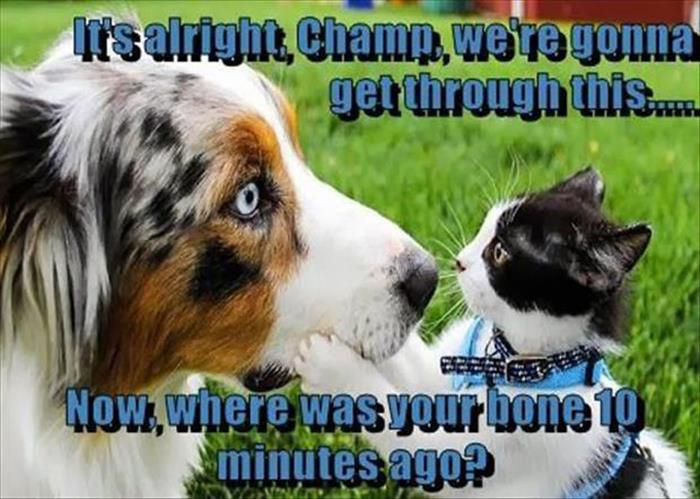 a funny animals (13)