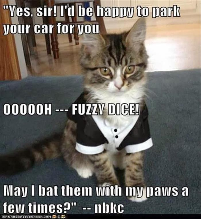a funny animals (14)