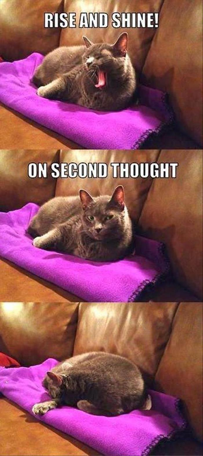 a funny animals (19)