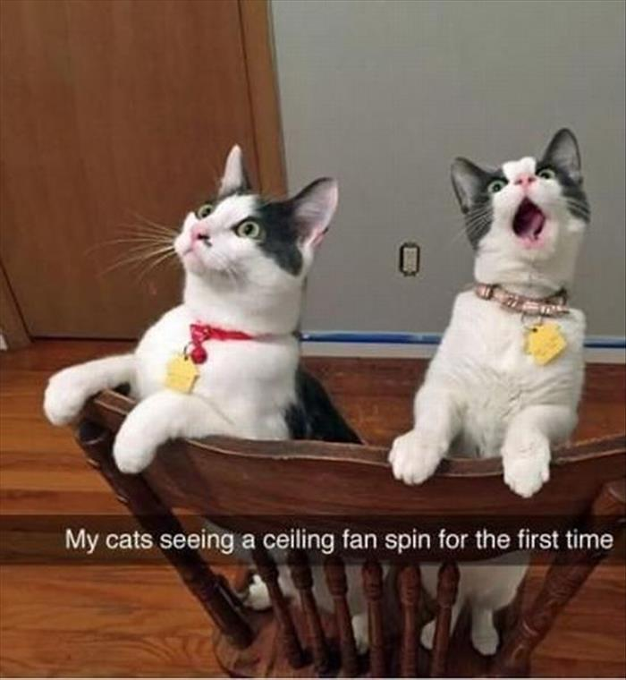 a funny animals (21)